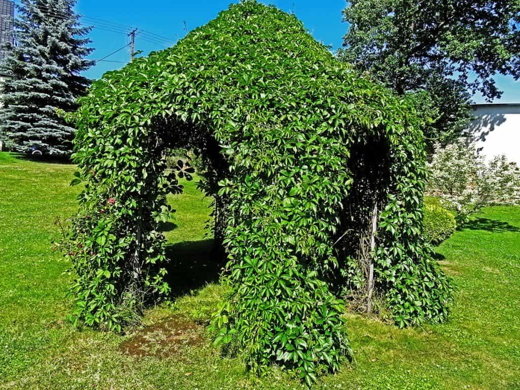 kerti kiülő növénnyel